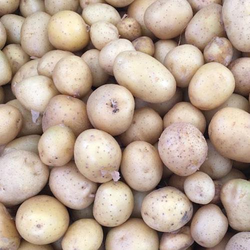 Bebek Patates